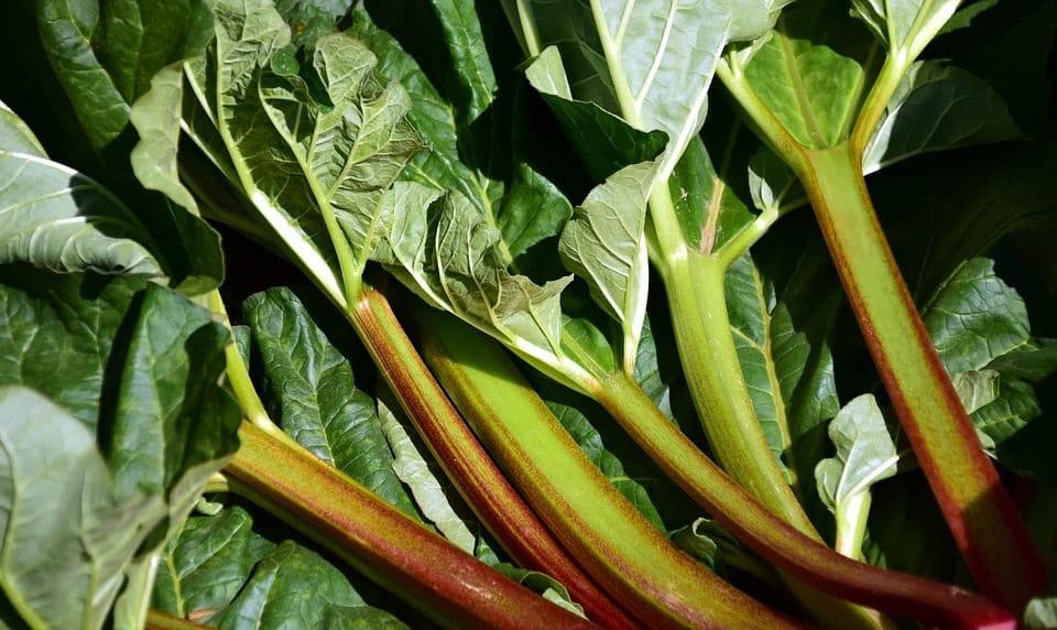 Jus de rhubarbe-tiges et feuilles