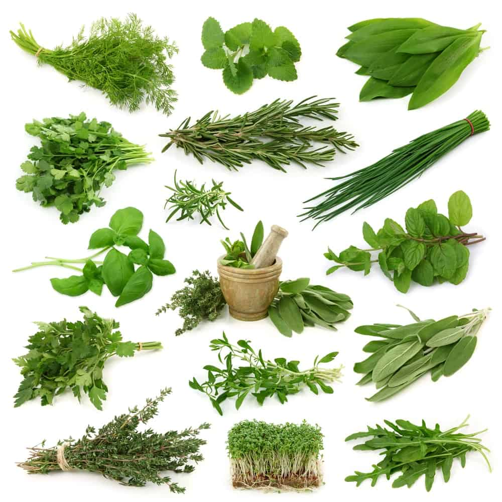 Antibiotiques naturels- herbes-